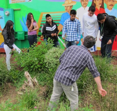 Volunteer Ian Niktab teaches TURNO students about the three types of grasses, and which we desire in our bioswales.  Ian works with Planting Communities in Woodburn.